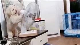 狗狗自己喬電風扇方向(圖/翻攝自寵物聯萌微博)
