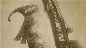 ▲大象(圖/翻攝自維基百科)