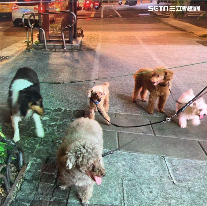 比特犬拖行貴賓百公尺至肚破腸流亡 飼主:我的狗平時很乖