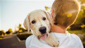 狗狗的心率。(圖/翻攝自pixabay)