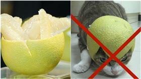 柚子,毛小孩不能戴柚子皮