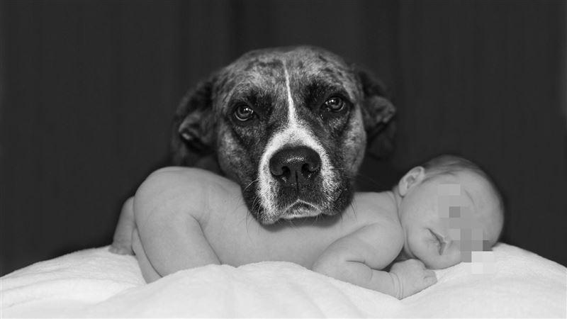 家犬發狂咬「12天大寶寶」!3警拉不住…男嬰遭撕咬慘死