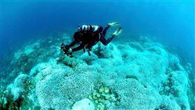 墾丁珊瑚白化狀況隨著因極端氣候每年夏天溫度不斷攀升,讓世界各地珊瑚面臨白化情形,今年更嚴重。圖為墾丁珊瑚目前白化狀況。(蔡永春提供)中央社記者郭芷瑄傳真  109年9月17日