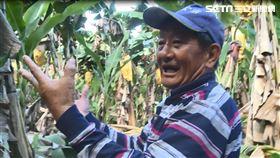 ▲台東關山香蕉農悲嘆2甲香蕉不到5萬元,半年心血全白費(圖/記者王浩原攝影)