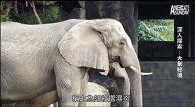 網紅配音惡搞動物「「刻紋摺濕炎」爆紅,掉出柯P苦笑回應。(圖/翻攝自YouTube)
