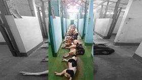 動物組織,棄養,安樂死,購買,領養,寵物