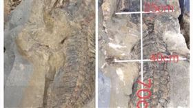 四川出現2.5億年前的化石(圖/翻攝自梨視頻)