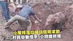 小象摔落垃圾坑狂鳴求助 村民發動怪手5hrs暖救援
