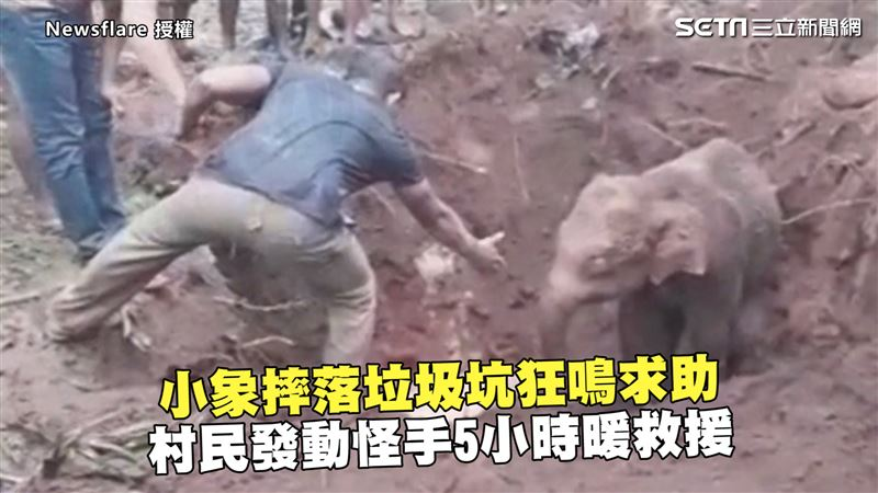 影/小象摔落垃圾坑狂鳴求助 村民發動怪手5hrs暖救援