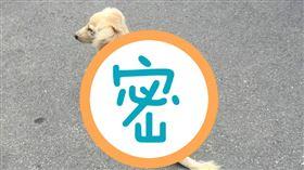 狗狗、背影、等待、失蹤。(圖/翻攝自爆怨公社)