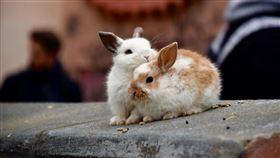 兔子(圖/翻攝自unsplash)