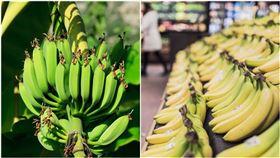 未熟香蕉vs成熟香蕉