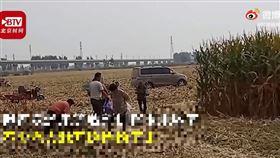 中國,河南,農田,玉米,採收,老人(圖/翻攝自時間視頻)