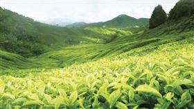 2020首屆佳葉龍茶(GABA茶)評比 - 記者說明會