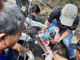 救援團隊協助受困台灣黑熊脫困