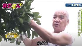 為了一圓老丈人的遺願,日本工頭變成台灣柚農,跟著太太東京搬到台南麻豆,接下岳家的柚子園,一開始南宗義很不適應,完全沒有農業經驗的他靠著韌性克服了困難,即便年輕時因為工安意外,導致他的右手只剩一根指頭,這都沒難倒他反倒入境隨俗,從農民身上學到了旺盛的生命力,種出汁多甜美的麻豆柚子。