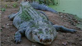 不愛吃肉?風景區鱷魚瘦成「骷顱頭」 醫解剖見死因鼻酸了(圖/翻攝自Pixabay)