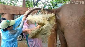 泰國,清邁,大象,獸醫,灌腸。(圖/翻攝自Samui Elephant Sanctuary臉書)