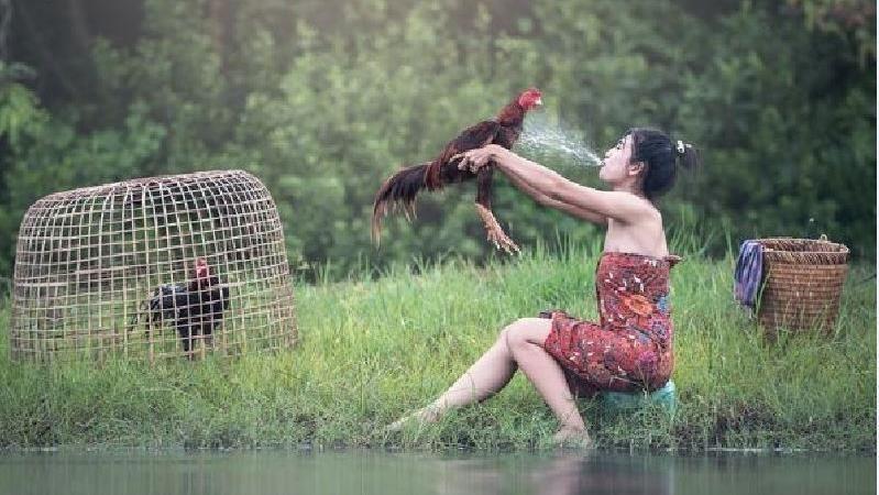 古語「男怕屬雞,女怕屬羊」是何意?