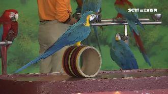 看鸚鵡表演好療癒 頑皮世界吸親子客