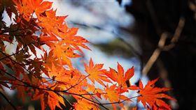 ▲秋天(圖/翻攝自pixabay)
