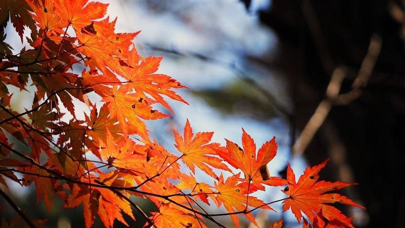秋天最後節氣「霜降」 算命:這1天可斬小人、許願