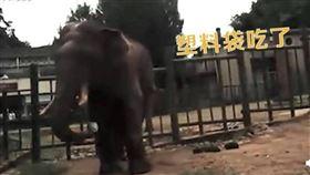 大象,塑膠袋,遊客,誤食