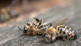 蜜蜂。(圖/翻攝自爆廢公社)