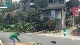 4隻小鴨掉隊…女下車幫過馬路 慘遭鴨媽媽「飛撲攻擊」!(圖/翻攝自微博)
