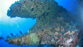 帛琉海底景觀壯麗。(圖/業者提供)