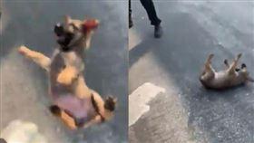 狗狗摔落地面,痛得哀嚎。(圖/翻攝自instagram/mulaflare)