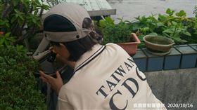 疾管署防疫人員於新北市板橋區港嘴里本土登革熱個案住家周邊進行孳生源查核。(疾病管制署提供)