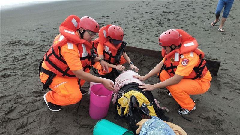 2瓜頭鯨擱淺林口下福沙灘! 民眾急叩救援:有人能幫忙嗎
