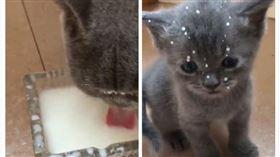 寵物,貓咪,牛奶,喝奶,無辜(圖/翻攝自微博)
