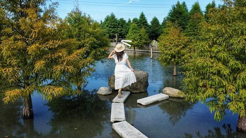 「水漾森林」落羽松秘境重新開放 泰安新網美風造景超好拍