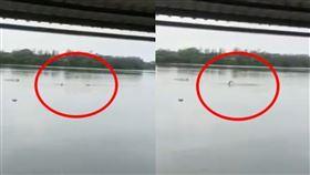 墨西哥湖畔,有民眾游泳遭鱷魚拖入下水。(圖/翻攝自推特)