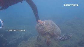 摸海龜還嗆1800