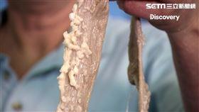 你敢信?!世界最動聽的琴弦 竟是乳牛腸子做的(圖/Discovery頻道提供)