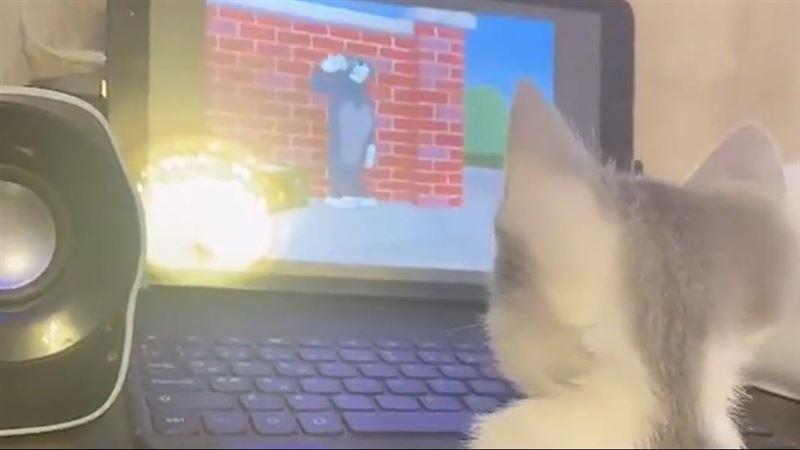 讓主子學捉老鼠?奴才用這卡通「線上教學」網一看過程笑翻