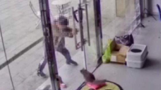 店貓遭男童「門夾頭、刀戳眼」 爸拒道歉:他只是孩子!