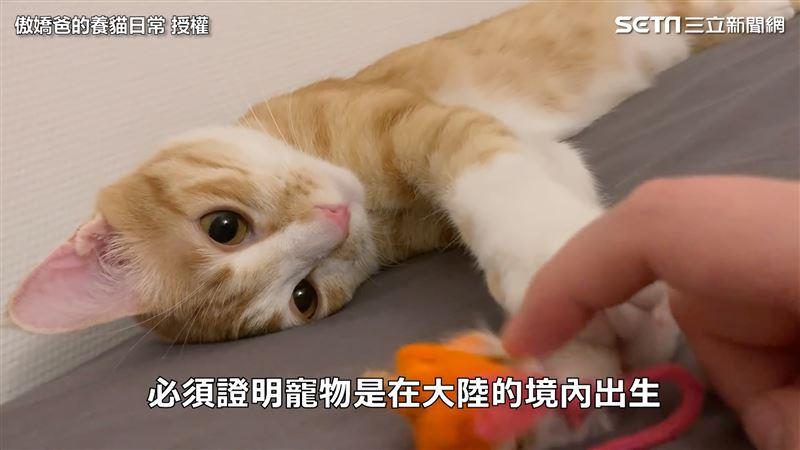 從中帶貓回台只需3萬 完整程序公開