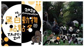 黑白動物點點名 (圖/臺北市立動物園提供)