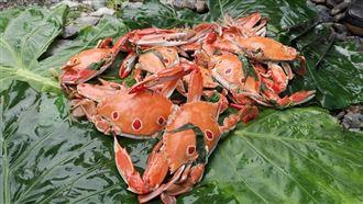 煮「秋蟹」?原住民加這味 老饕驚呆