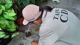疾管署防疫人員於桃園市龜山區本土登革熱個案活動地,進行孳生源查核。圖/疾病管制署提供