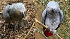 英國「林肯郡野生動物中心」(Lincolnshire Wildlife Centre)收容5隻會說髒話的鸚鵡,令園方相當頭痛。(合成圖/翻攝自lincswildlifepark  IG)