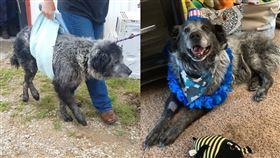 曾遭受凌虐、棄養的「桑福」(Sanford)直至遇到愛媽而有了轉變。(圖/翻攝自Dallas Dog - Rescue.Rehab.Reform臉書專頁)