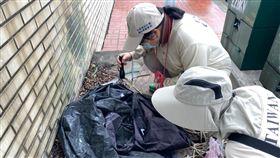 疾管署防疫人員於桃園市龜山區本土登革熱個案活動地進行孳生源查核。(疾病管制署提供)