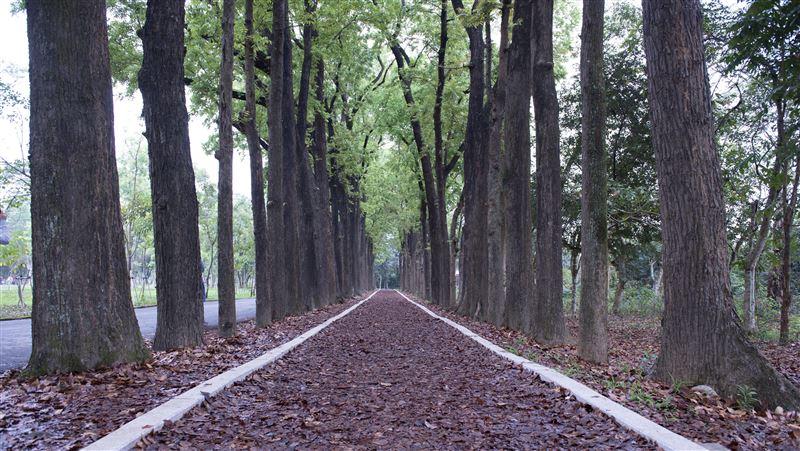 高雄秘境/城市中的最後綠地!來「新威森林公園」淨化心靈
