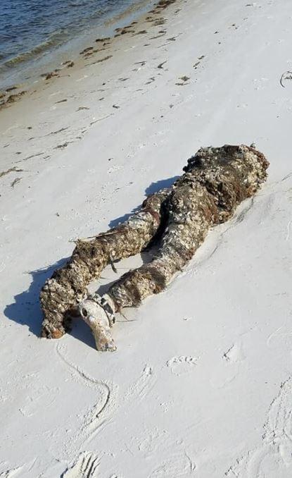 海灘趴著「腐爛斬首屍」!全身纏繞藤壺 她湊近一摸直嘆氣