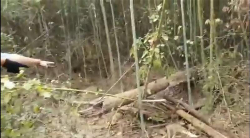 溶屍埋竹林 在地人:進去是無尾路